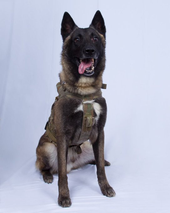 Dog that Kill the ISIS Leader